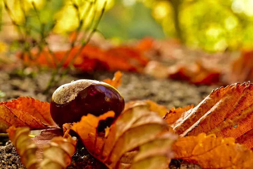 Visita Galicia en otoño